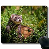 High quality, is not easy to bad Mouse Pad animal Order Support Ready 8.66 Inch (220mm) X 7 Inch (180mm) Easy to carry MP011707
