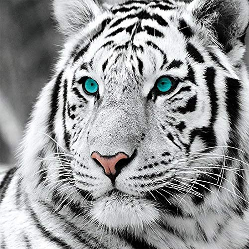 DIY Diamond Painting Kits for Adults Full Round Drills White Tiger Paint by Number Shiny Rhinestone Embroidery Cross Stitch Animal Picture 30x30cm ()