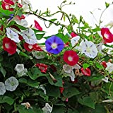 Flower Seeds for Garden, 50Pcs Mixed Color Morning Glory Seeds Climbing Plants Garden Yard Planting