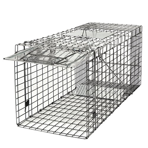 Review HomGarden Humane Live Animal Trap 32 x 12.5 x 12 Catch Release Cage for Large Nuisance Rodents Control Raccoon Mole Gopher Opossum Skunk Groundhog Squirrel Spay Feral Stray Mouse Rabbits
