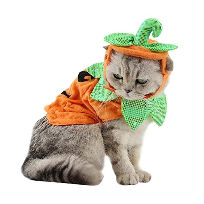 Amazon.com : Jocestyle Cute Halloween Pumpkin Teddy Dog Hat Cat Hat Costume Polyester Clothing Pet Decor : Pet Supplies