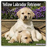 Yellow Labrador Puppies Calendar - Dog Breed Calendars - 2017 - 2018 wall Calendars - 16 Month by Avonside