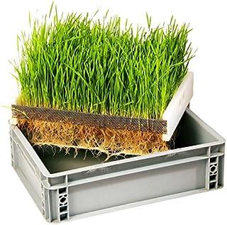 Eschenfelder Keimkiste G zur Anzucht von Weizengras Gerstengras Keimgerät Sprossen ziehen 40x30 cm Getreide Gerste
