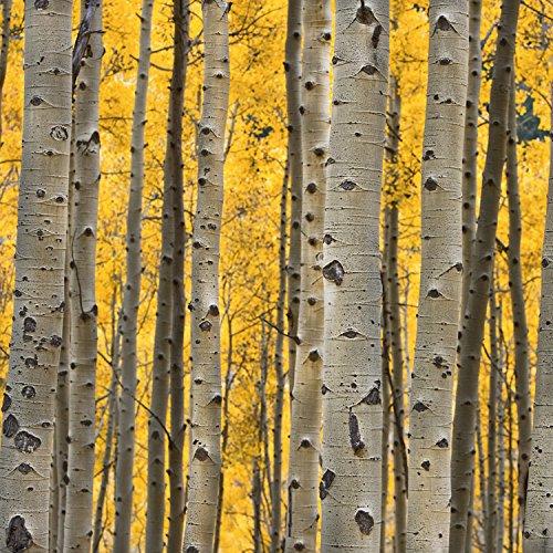 Aspen Trees 3 (paper) by Cook, Jamie