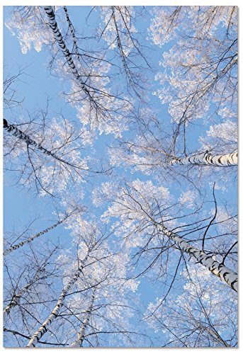 12 'Snow Tops' Boxed Christmas Cards With Envelopes 4.63 x 6.75 inch, Holiday Note Cards with Snow-Covered Branches and Tree Tops, Stationery Set for Holidays, Winter, Parties B9632AXSG