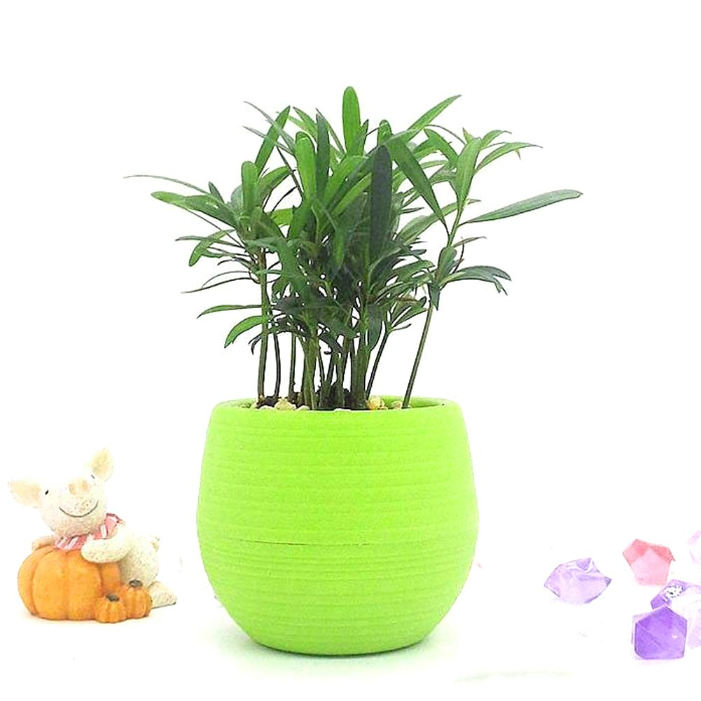 Mimgo Store 1set of 5Pcs Colourful Cute Mini Round Plastic Plant Flower Pot Garden Home Office Decor Planter Green