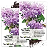 Seed Needs, Wild Bee Balm (Monarda fistulosa) Twin Pack of 400 Seeds Each