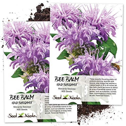 Seed Needs, Wild Bee Balm (Monarda fistulosa) Twin Pack of 400 Seeds Each - Herb Bergamot