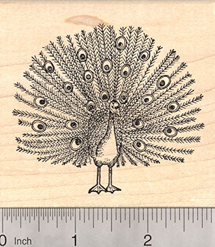Peacock Rubber Stamp, Male Peafowl Bird