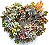 "Living Wreath Planted with Live Plants - 9"" Actual Size with Plants 11"" Plus"