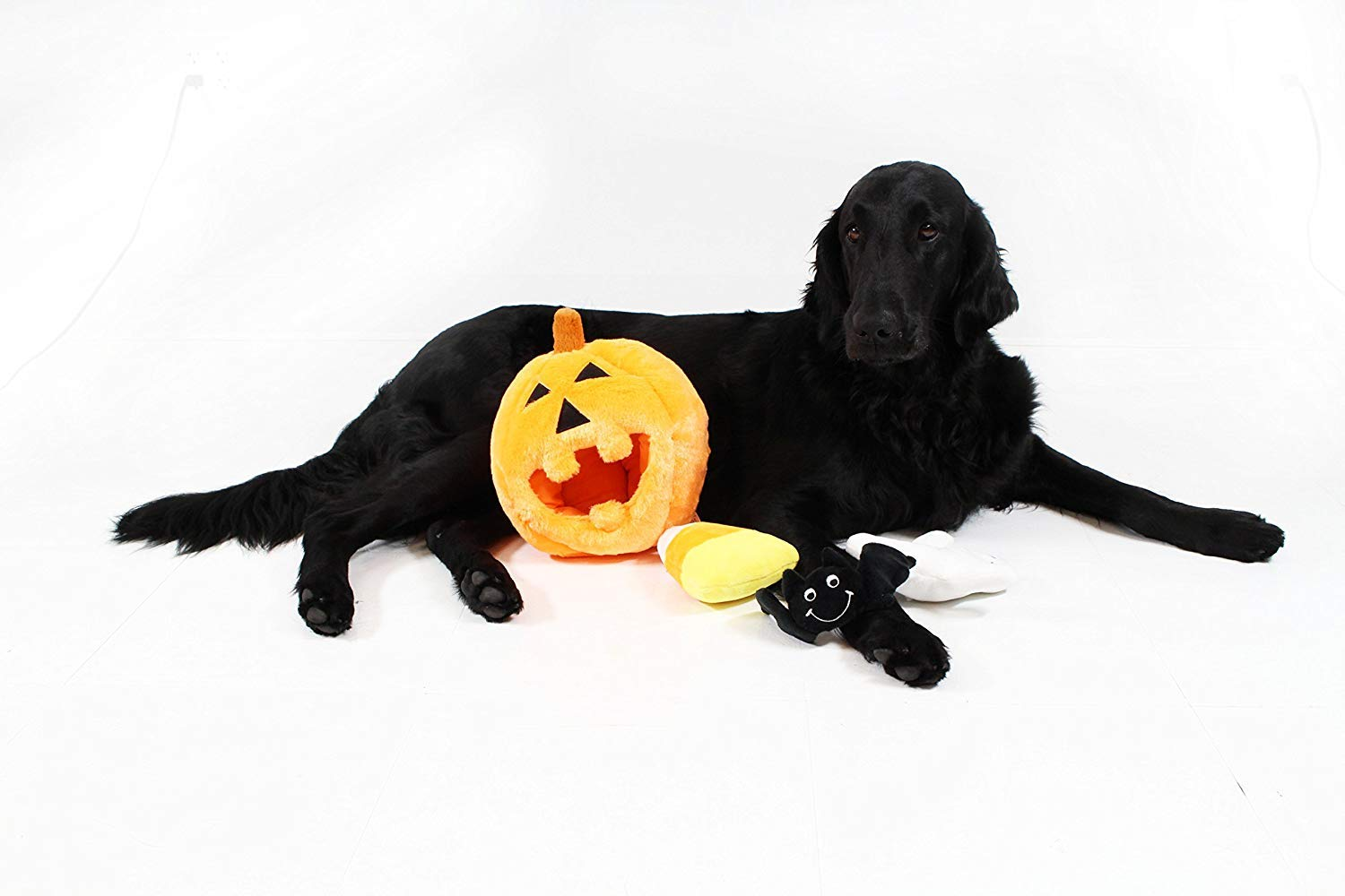 Midlee Pumpkin Find a Toy Halloween Dog Toy by Midlee