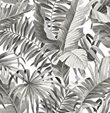 A-Street Prints 2744-24134 Alfresco Black Palm Leaf Wallpaper Alfresco Palm Leaf Wallpaper