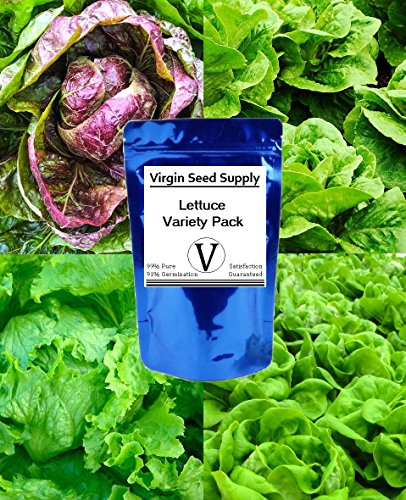 Virgin Seed Supply (4) Lettuce Seed Variety Pack - Buttercrunch, Iceberg, Red Romaine, and Parris Island Romaine Varieties -Non-GMO Organic Heirlooom- 4,200 Seeds -