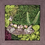 Carpentree 15''x15'' Nature's Finery-Biophilic Framed Art