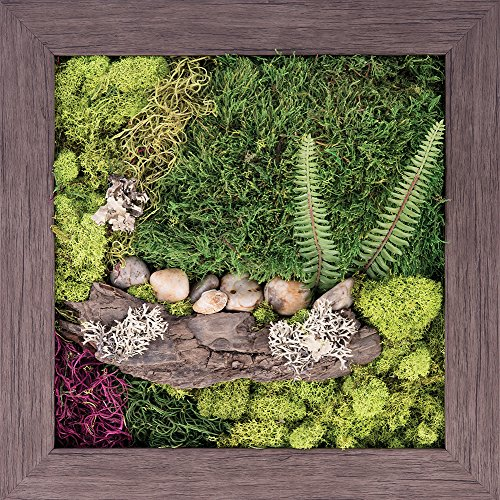 Carpentree 15''x15'' Nature's Finery-Biophilic Framed Art by Carpentree