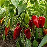 Carmen Hybrid Sweet Pepper Garden Seeds - 1 Oz - Non-GMO, Vegetable Gardening Seed - Italian Sweet Pepper