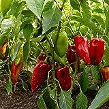 Carmen Hybrid Sweet Pepper Garden Seeds - 100 Seeds - Non-GMO, Vegetable Gardening Seed - Italian Sweet Pepper