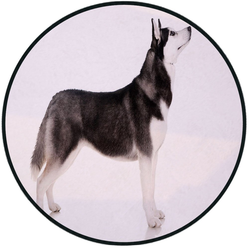 Printing Round Rug,Alaskan Malamute,Alaskan Animal Arctic Canine Mammal Obedient Companion Portrait Purebred Mat Non-Slip Soft Entrance Mat Door Floor Rug Area Rug For Chair Living Room,Black White