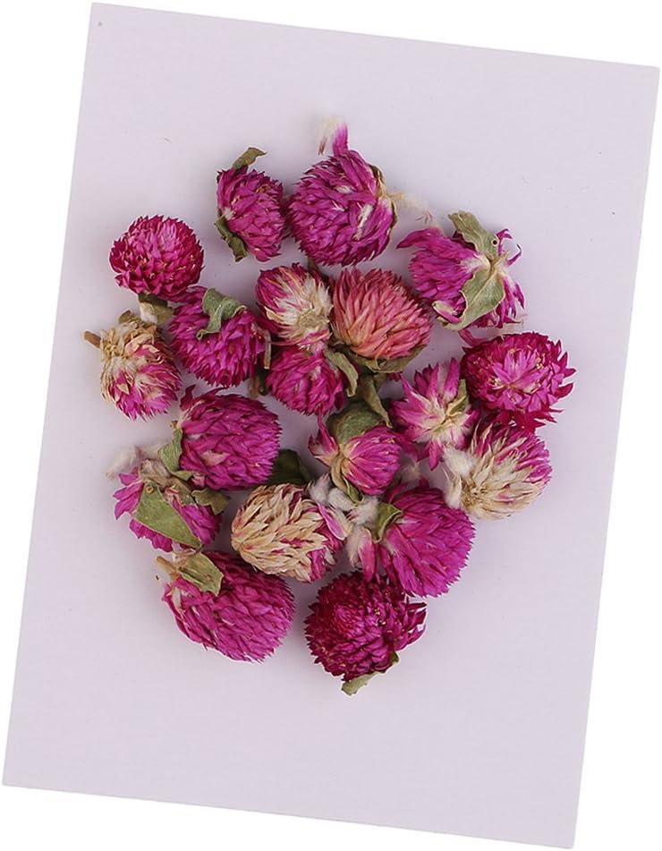 IPOTCH 20 St/ück Trockenblumen Getrocknete Blumen Bl/ätter Gomphrena Globosa f/ür Handwerk Kartenherstellung Basteln
