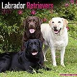 Labrador Calendar 2017 - Dog Breed Calendars - Chocolate Lab Calendar - Black Lab Calendar - Yellow Lab Calendar - 2016 - 2017 wall calendars by Avonside