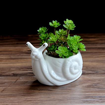 HEYFAIR White Ceramic Cactus Succulent Planter Pot Container Gardens Snail