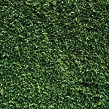 SJOLOON 8x8ft Nature Green Leaves Photography Backdrop Wedding Children Birthday Party Banner Photo Background Studio Props 10923