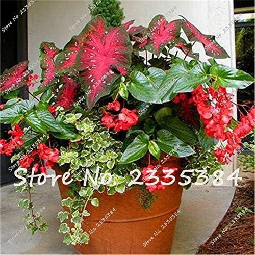 Gran promoción! Plantas de aire purificadoras de flores interiores ...