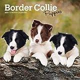 Border Collie 2021 Cachorro Calendario 15/% OFF Múltiple Pedidos Cachorros