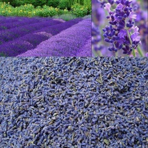Dried Lavender flowers Crafts Soap Pillows Wedding Confetti Pot Pouri - 200g France