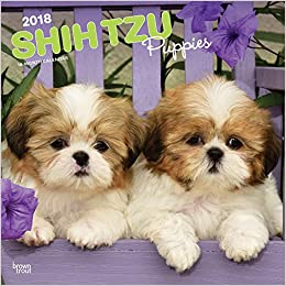 amazon com shih tzu puppies 2018 12 x 12 inch monthly square wall