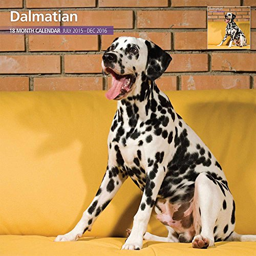 Dalmatian 18 Month 2016 Traditional Wall Calendar