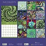 2018 Succulents Wall Calendar
