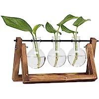 Hyindoor Jarrón de Vidrio para Planta de Hidropónica