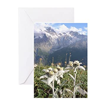 Amazon Cafepress German Edelweiss Mountain Greeting Card