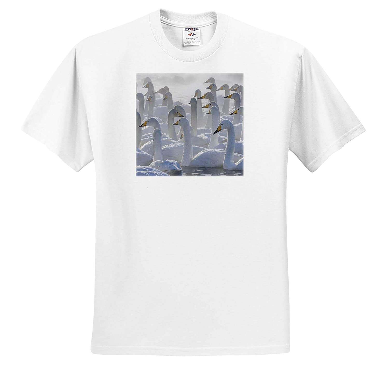 Japan 3dRose Danita Delimont - Adult T-Shirt XL Whooper Swans ts/_312755 Hokkaido Swans