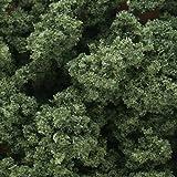 #10: Clump Foliage 57.7 Cubic Inches-Medium Green