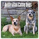 Australian Cattle Dogs 2018 12 x 12 Inch Monthly Square Wall Calendar, Animals Dog Breeds (Multilingual Edition)