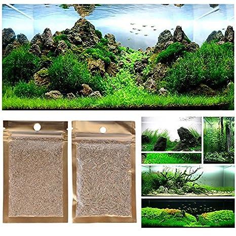 Aubess - Semillas de planta acuática para decoración de acuario y alimento para peces (césped corto): Amazon.es: Productos para mascotas