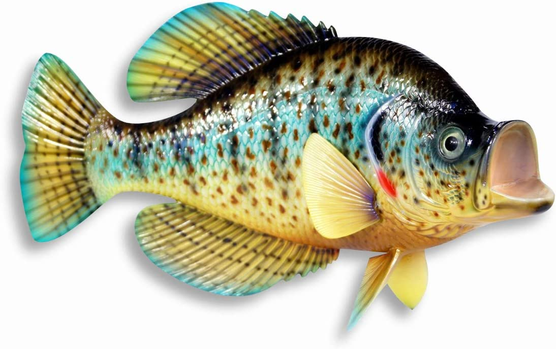 """Handpainted Red Dot Crappie Wall Mount Decor Plaque Game Fish Replica 15"""""""