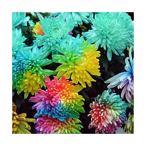 Ncient 20/50/100 Semi Sementi di Margarita di Color Di Arcobaleno Semi di Fiori Rari Fiori Piante per Orto Giardino… 4 spesavip