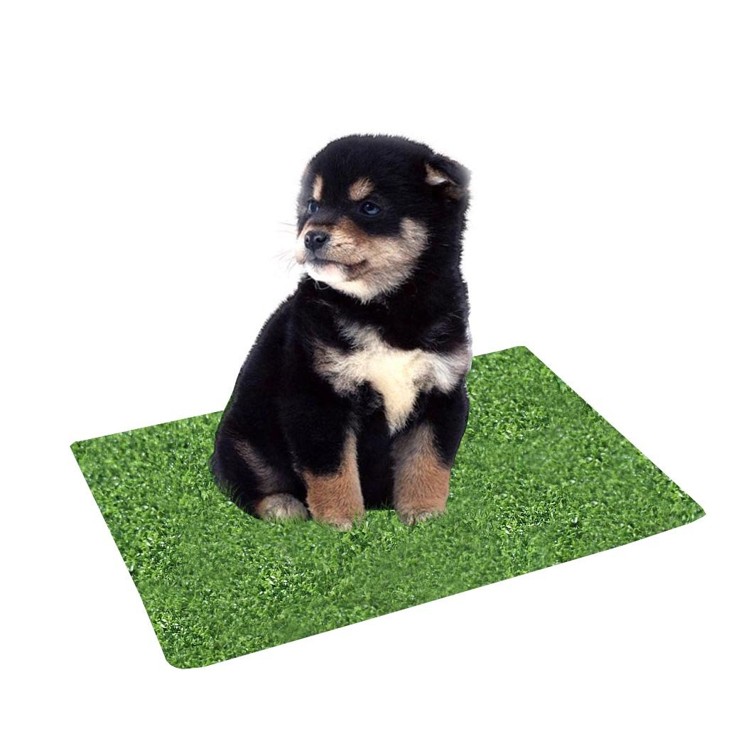 Kwan Artificial Grass Turf Training Pad Replacement for Pet Potty Toilet Trainer for Puppy Dog Pee Indoor (Small)