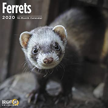 THE FERRET Wall Calendar 2020