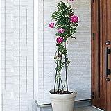 Garden Obelisk Trellis for Potted Climbing Plants