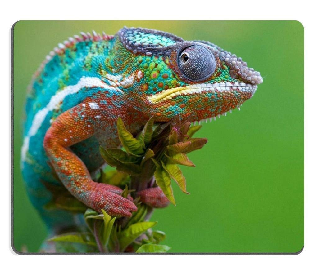 Amazing Chameleon Branch Lizard Nature Macro Mouse Pads Amazon Co Machost Co Dining Chair Design Ideas Machostcouk