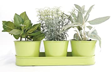 Amazon.com : Windowsill Planter Indoor, Green Galvanized Metal ...