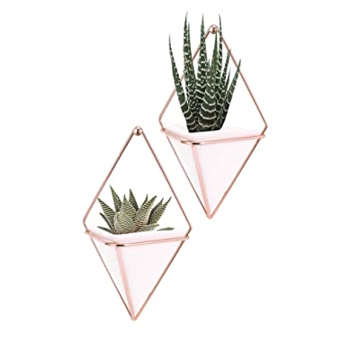 Hanging Vase,LANMU Air Plants Pots,Hanging Wall Decor,Plant Holder,Hanging Plant for Air Plants/Succulents/Cactus Plants/Office Plants/Artificial Plant (2 Pack)