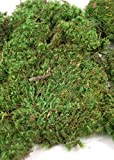 Way Home Fair Mood Moss 4 lbs 1'' Thick Natural