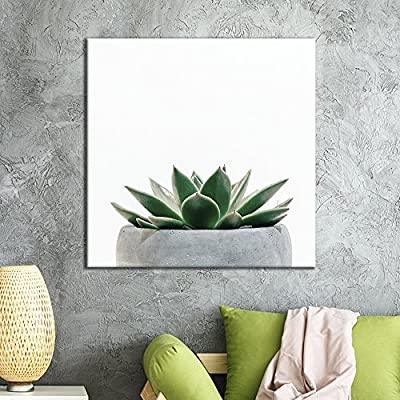Premium Creation, Gorgeous Piece of Art, Square Green Succulent Plant in The Pot with White Background