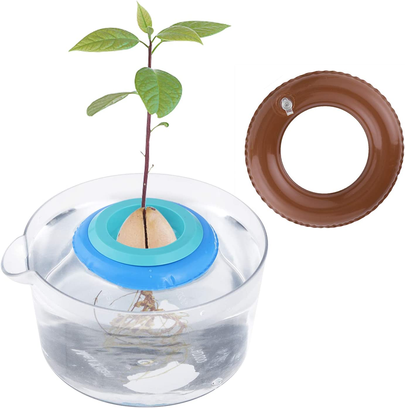 Avocado Tree Growing Kit with Clear Pot-Avocado Planting Bowl for Plant Your Own Avocado Trees Garden Gift for Avocado Lover