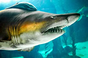 Sand Tiger Shark Up Close Photo Art Print Poster 36x24 inch
